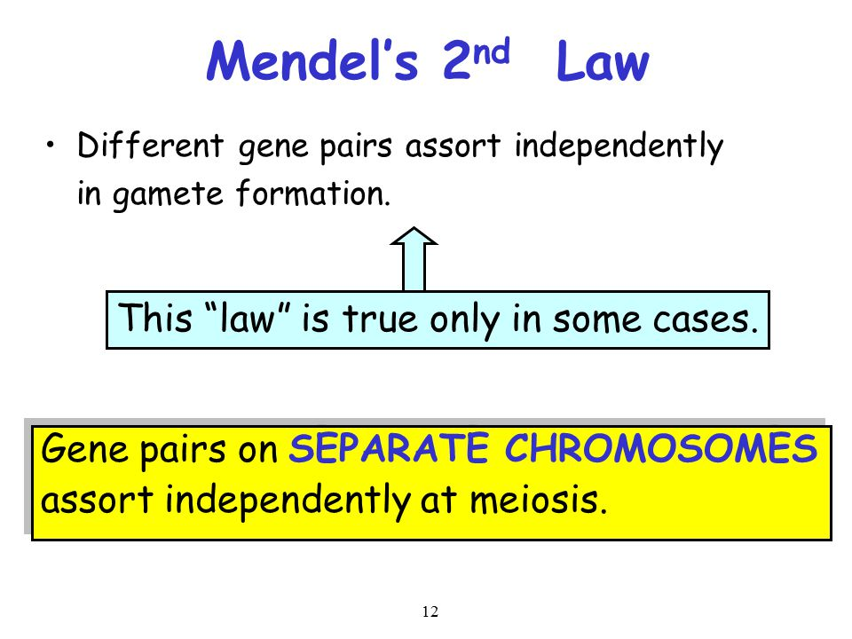 12 Mendel's 2 nd Law Different gene pairs assort independently in gamete formation. Gene pairs on SEPARATE CHROMOSOMES assort independently at meiosis