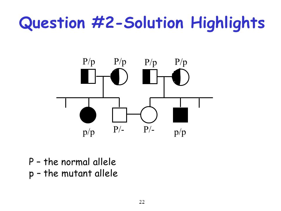 22 Question #2-Solution Highlights P/p p/p P/- P – the normal allele p – the mutant allele