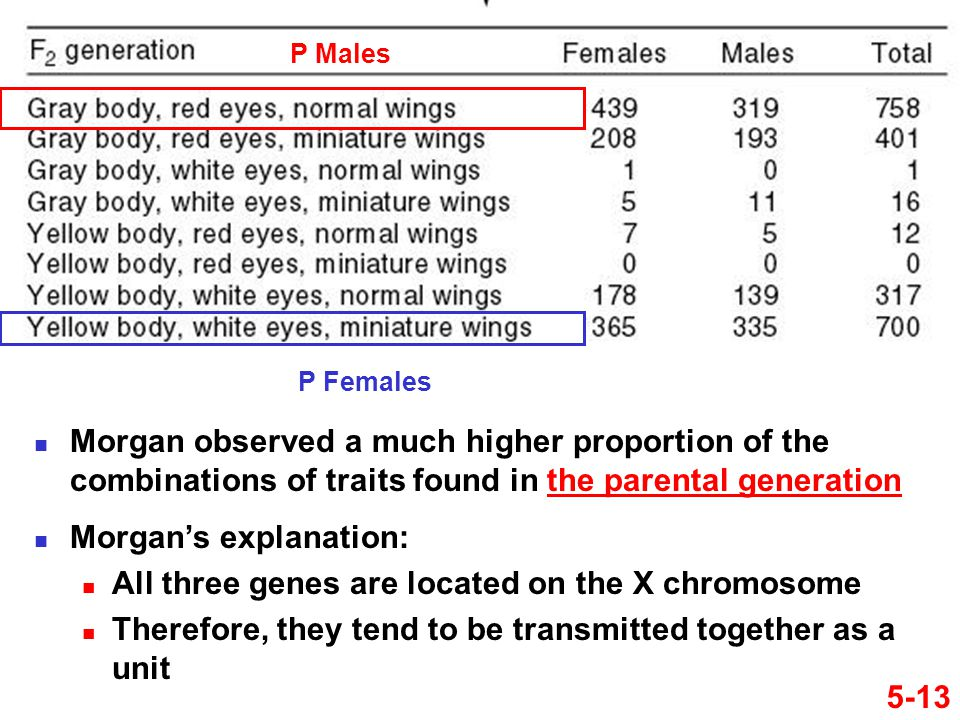 5-13 Morgan observed a much higher proportion of the combinations of traits found in the parental generation P Males P Females Morgan's explanation: A