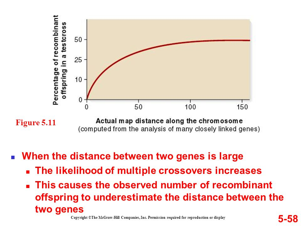 5-58 Copyright ©The McGraw-Hill Companies, Inc. Permission required for reproduction or display When the distance between two genes is large The likel