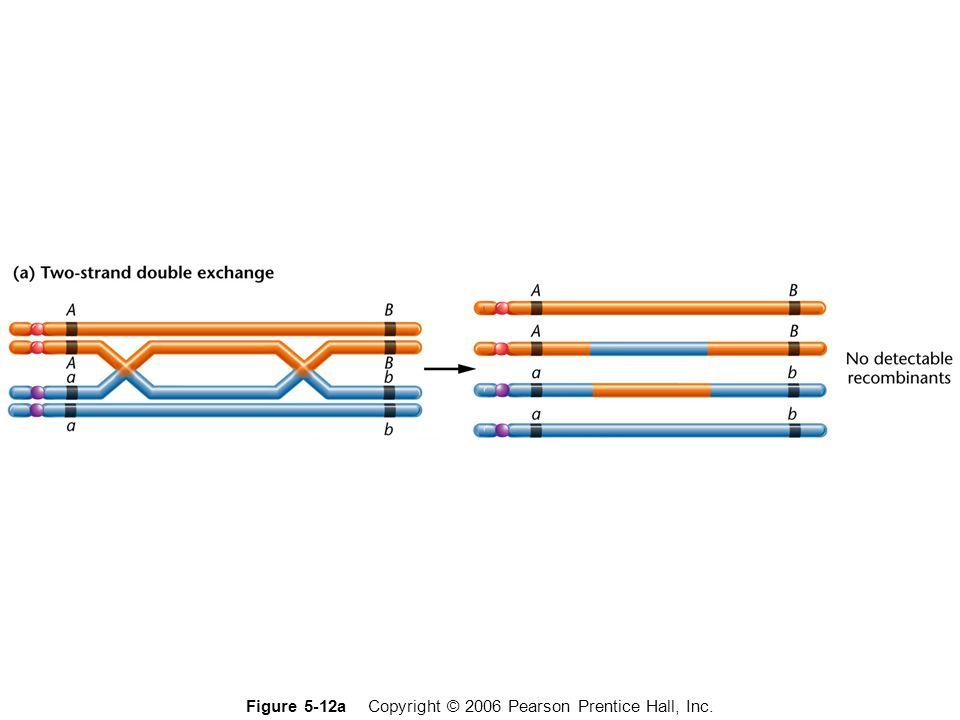 Figure 5-12a Copyright © 2006 Pearson Prentice Hall, Inc.