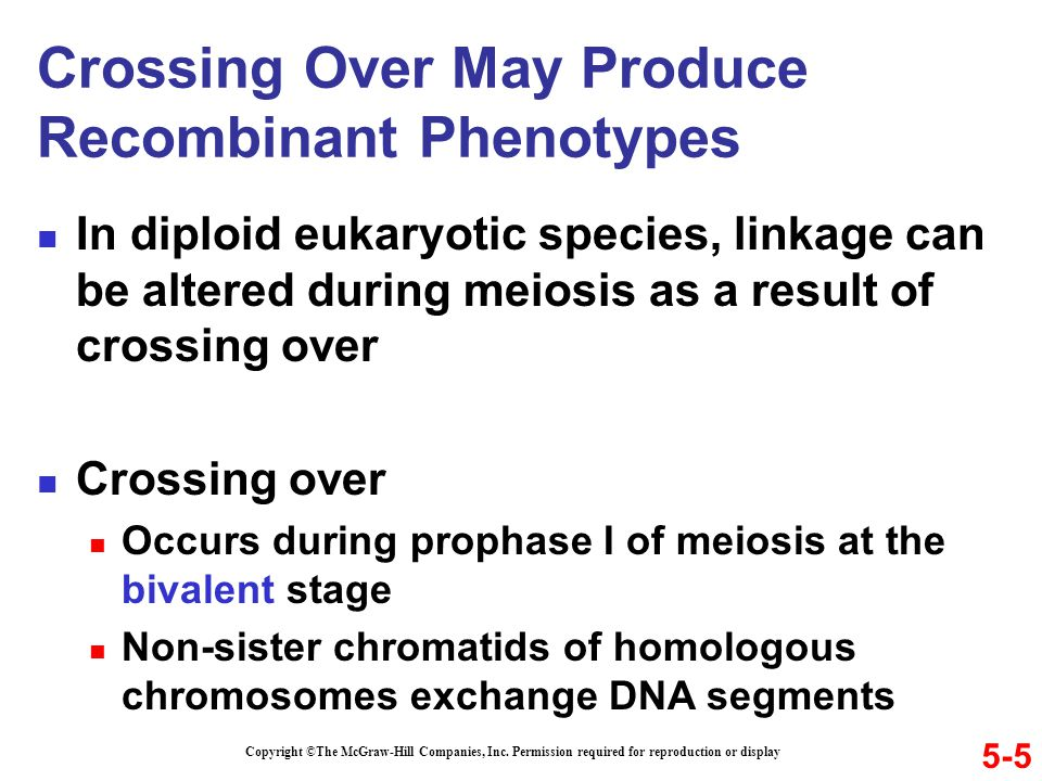 Crossing Over May Produce Recombinant Phenotypes In diploid eukaryotic species, linkage can be altered during meiosis as a result of crossing over Cro