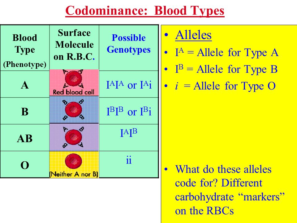 Codominance: Blood Types Alleles I A = Allele for Type A I B = Allele for Type B i = Allele for Type O What do these alleles code for? Different carbo