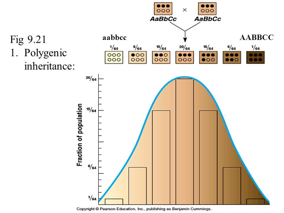 Fig 9.21 1.Polygenic inheritance: AABBCCaabbcc