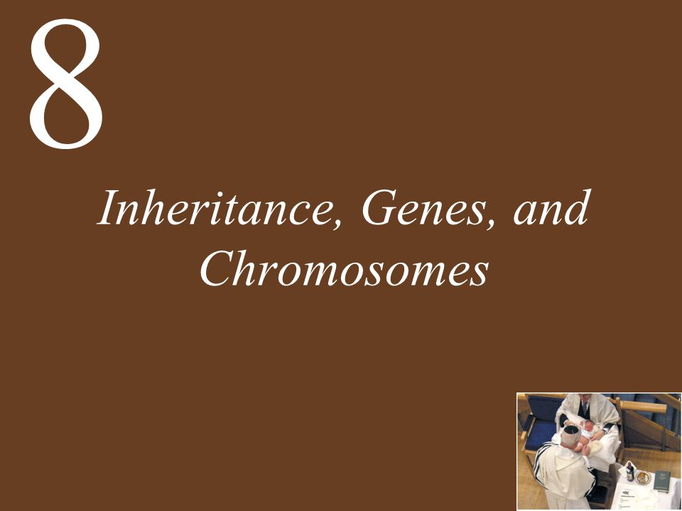 Inheritance, Genes, and Chromosomes 8