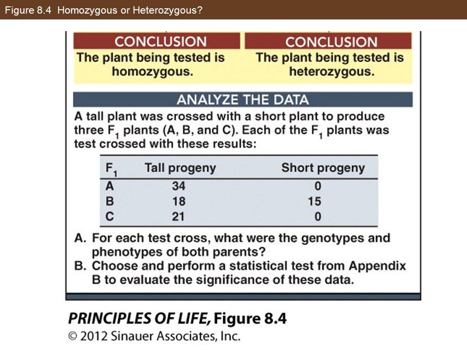 Figure 8.4 Homozygous or Heterozygous?