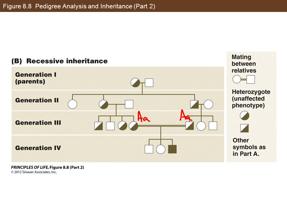 Figure 8.8 Pedigree Analysis and Inheritance (Part 2)