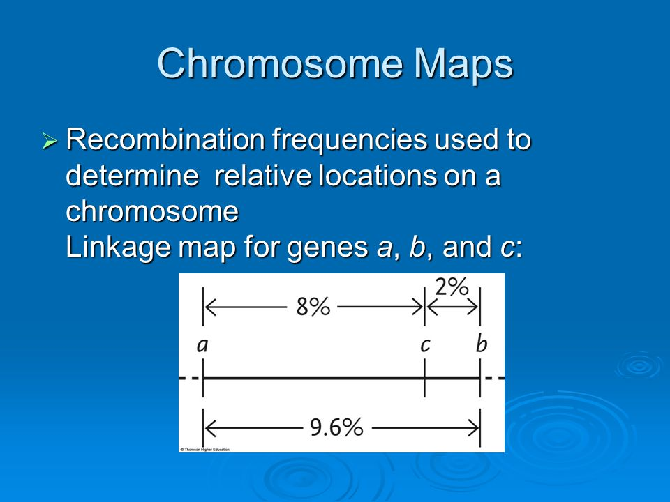 Chromosome Maps  Recombination frequencies used to determine relative locations on a chromosome Linkage map for genes a, b, and c: