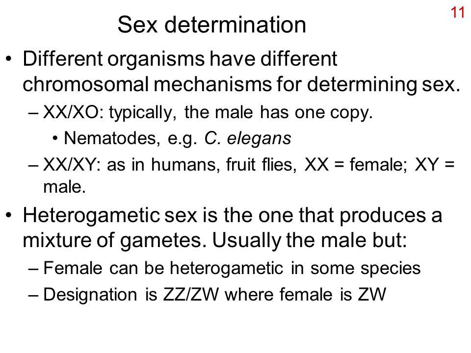 11 Sex determination Different organisms have different chromosomal mechanisms for determining sex.