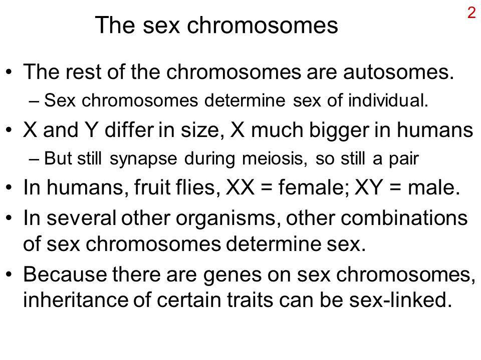 2 The sex chromosomes The rest of the chromosomes are autosomes. –Sex chromosomes determine sex of individual. X and Y differ in size, X much bigger i