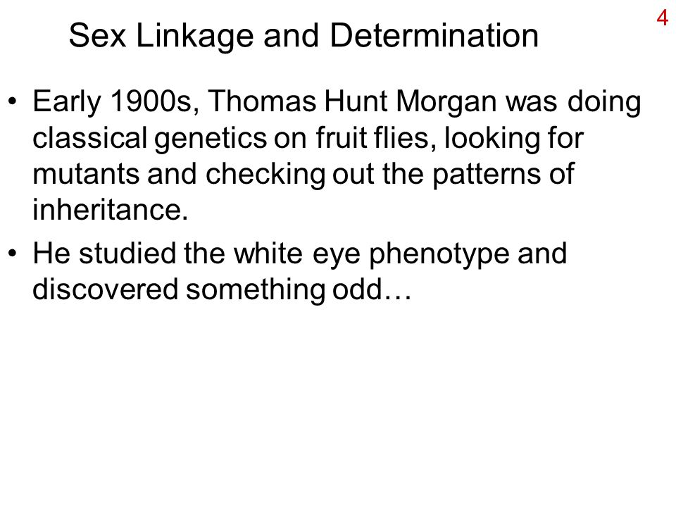 Sex Linkage and Determination Early 1900s, Thomas Hunt Morgan was doing classical genetics on fruit flies, looking for mutants and checking out the patterns of inheritance.