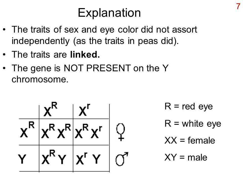7 Explanation The traits of sex and eye color did not assort independently (as the traits in peas did).