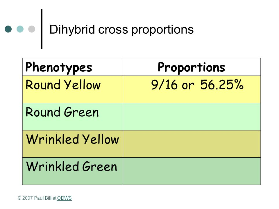 Dihybrid cross proportions PhenotypesProportions Round Yellow9/16 or56.25% Round Green Wrinkled Yellow Wrinkled Green © 2007 Paul Billiet ODWSODWS
