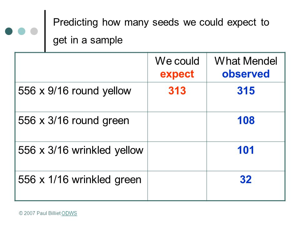 Predicting how many seeds we could expect to get in a sample We could expect What Mendel observed 556 x 9/16 round yellow313315 556 x 3/16 round green108 556 x 3/16 wrinkled yellow101 556 x 1/16 wrinkled green32 © 2007 Paul Billiet ODWSODWS