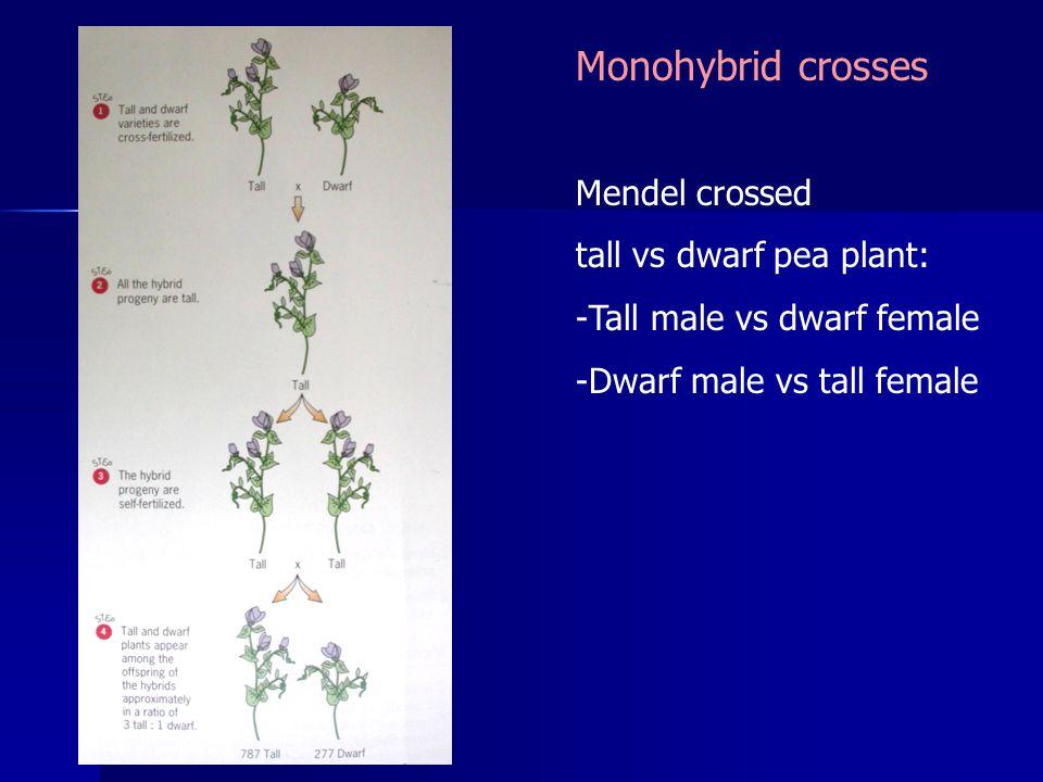 Mendel crossed tall vs dwarf pea plant: -Tall male vs dwarf female -Dwarf male vs tall female Monohybrid crosses