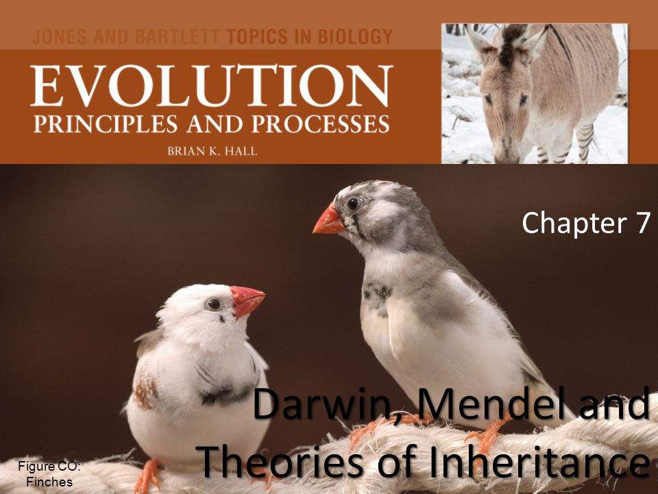 Darwin, Mendel and Theories of Inheritance Chapter 7 Darwin, Mendel and Theories of Inheritance Figure CO: Finches