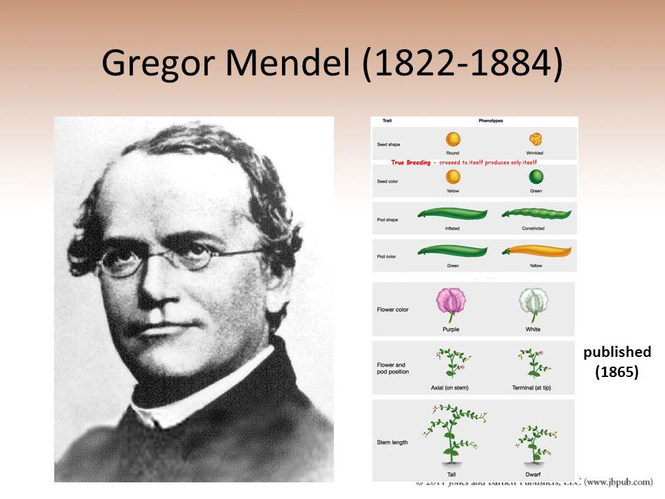 Gregor Mendel (1822-1884) published (1865)