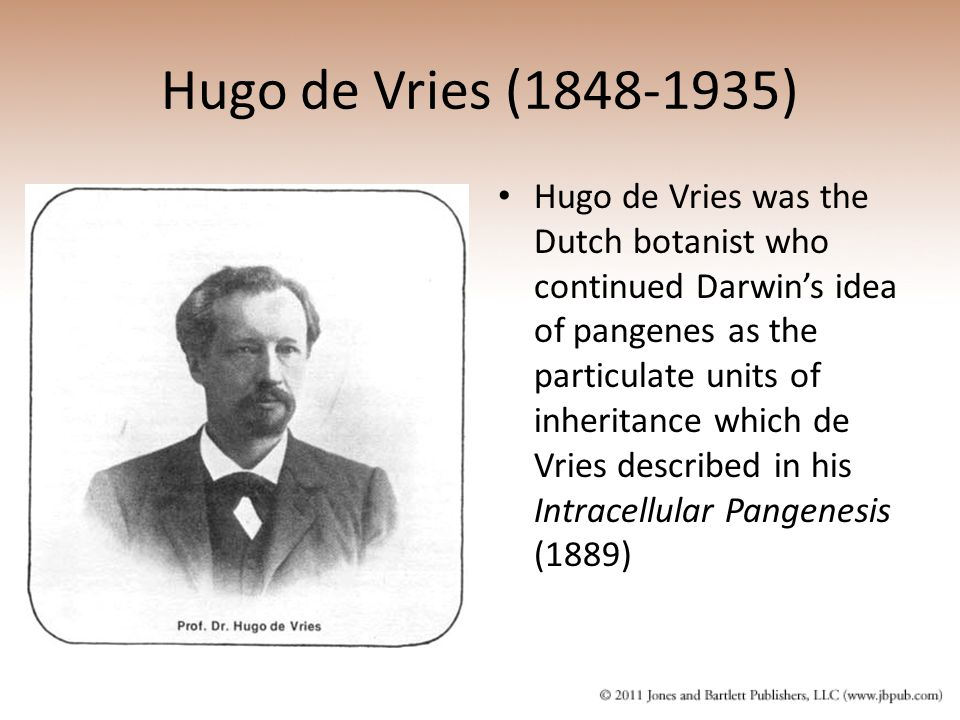 Hugo de Vries (1848-1935) Hugo de Vries was the Dutch botanist who continued Darwin's idea of pangenes as the particulate units of inheritance which d