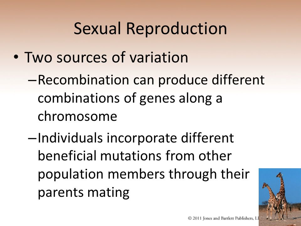 Sexual Reproduction Two sources of variation – Recombination can produce different combinations of genes along a chromosome – Individuals incorporate