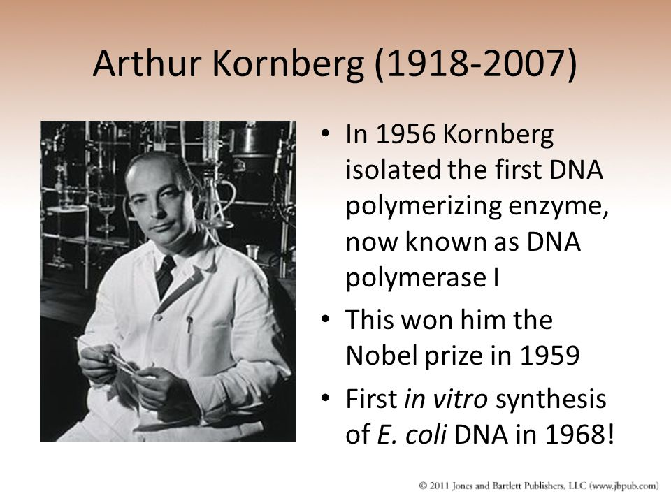 Arthur Kornberg (1918-2007) In 1956 Kornberg isolated the first DNA polymerizing enzyme, now known as DNA polymerase I This won him the Nobel prize in