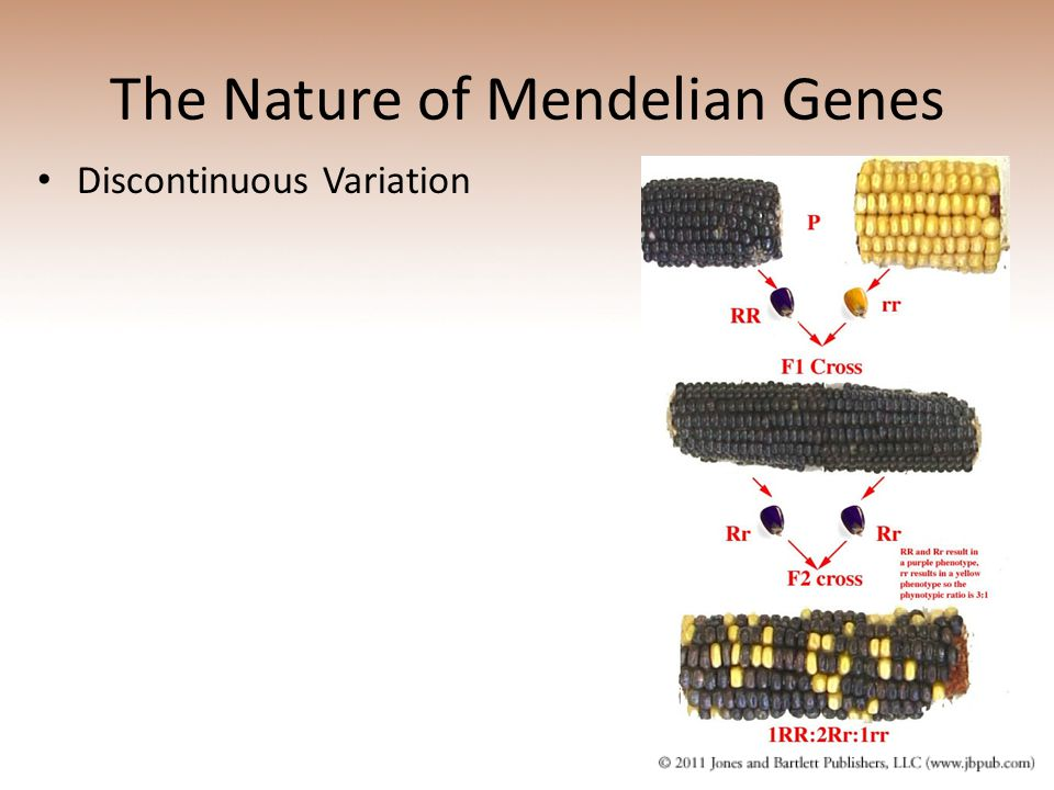 The Nature of Mendelian Genes Discontinuous Variation