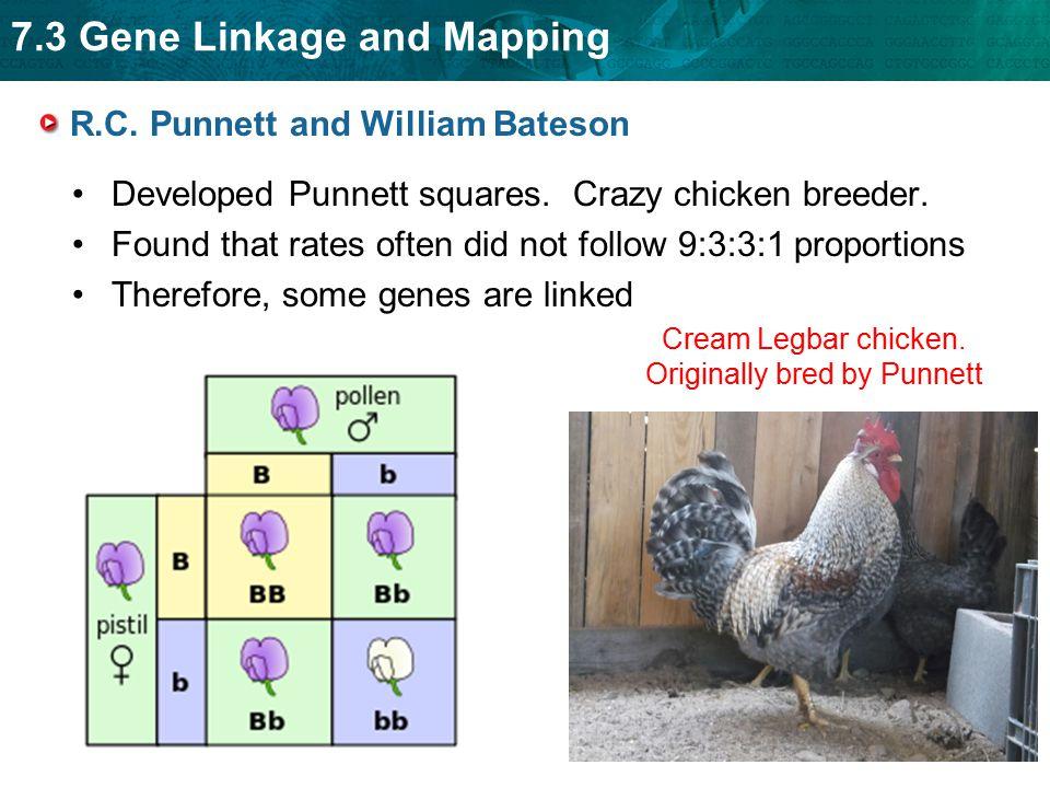 7.3 Gene Linkage and Mapping Gene linkage was explained using fruit flies.