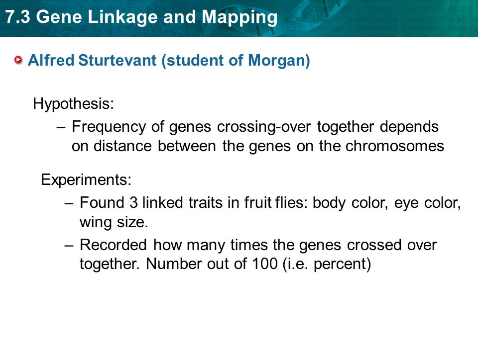 7.3 Gene Linkage and Mapping Alfred Sturtevant (student of Morgan) Hypothesis: –Frequency of genes crossing-over together depends on distance between