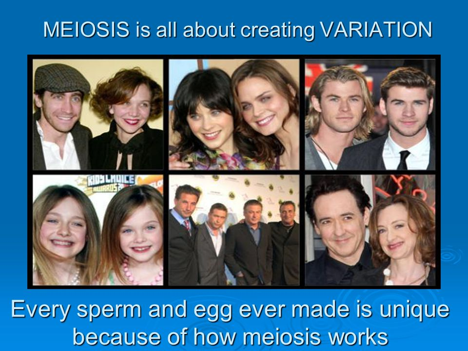 MEIOSIS is all about creating VARIATION Every sperm and egg ever made is unique because of how meiosis works