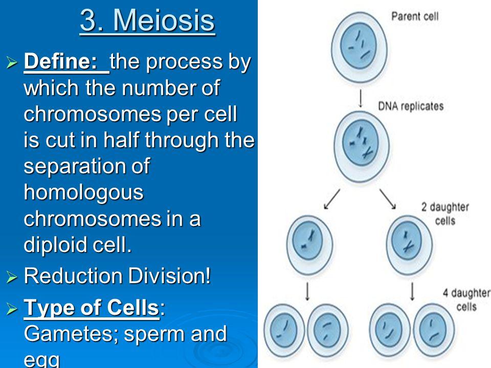 Meiosis Chromosome Count Meiosis 1 Meiosis 2