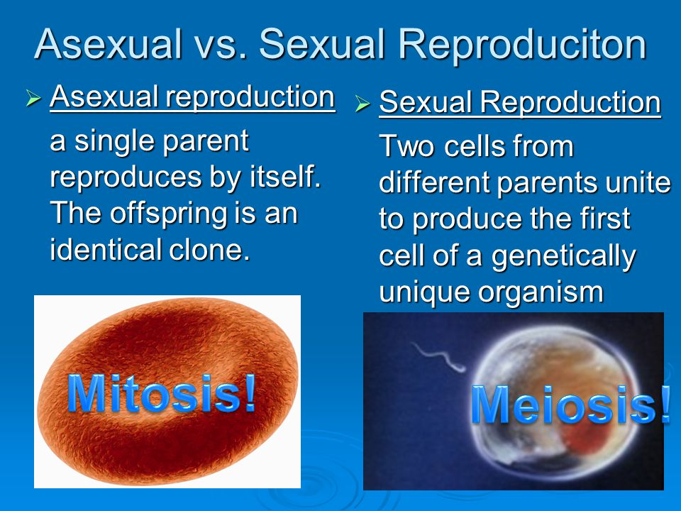 Asexual vs. Sexual Reproduciton  Asexual reproduction a single parent reproduces by itself. The offspring is an identical clone.  Sexual Reproductio
