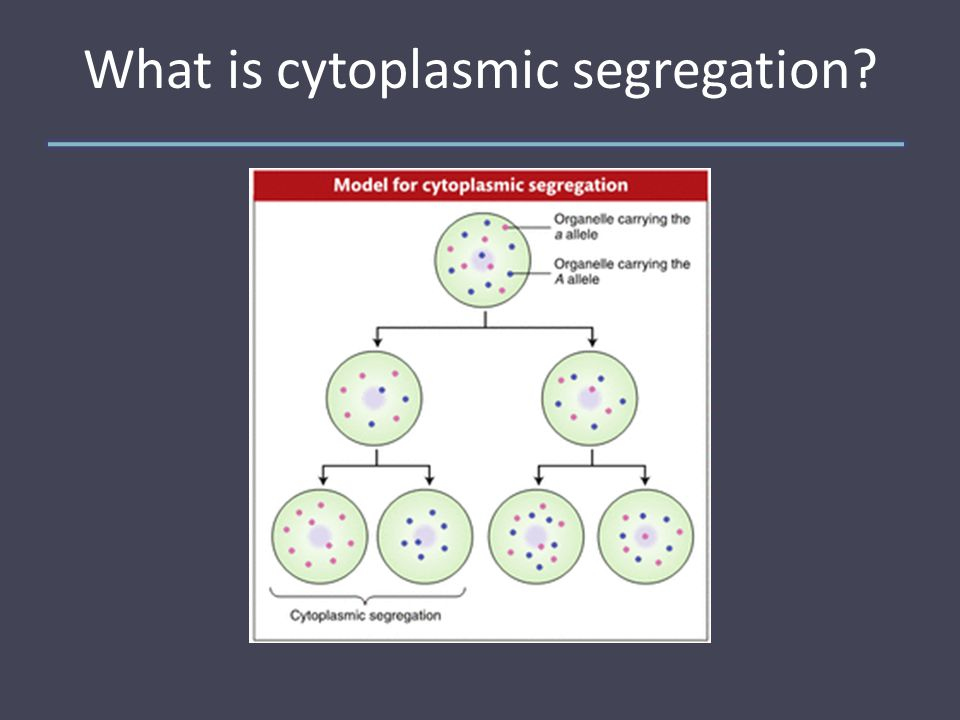 What is cytoplasmic segregation