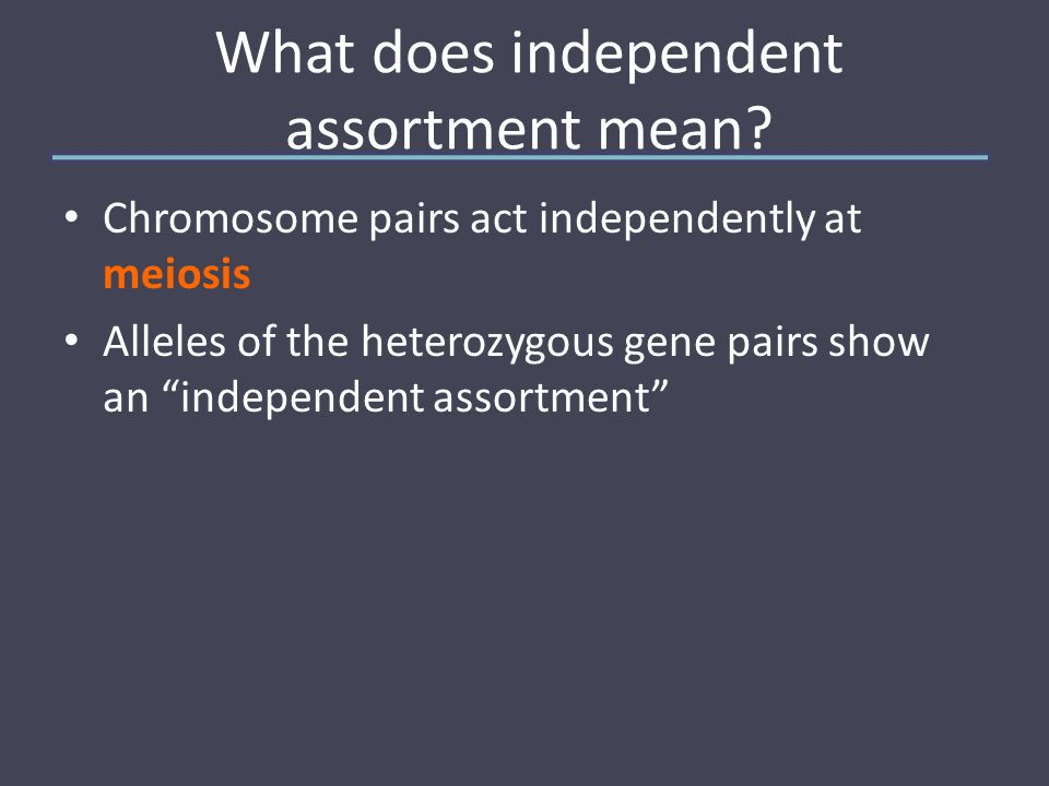 What does independent assortment mean.