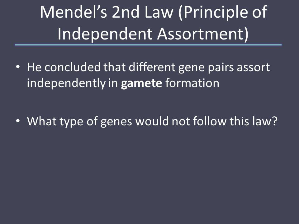 Independent Assortment in diploid organisms