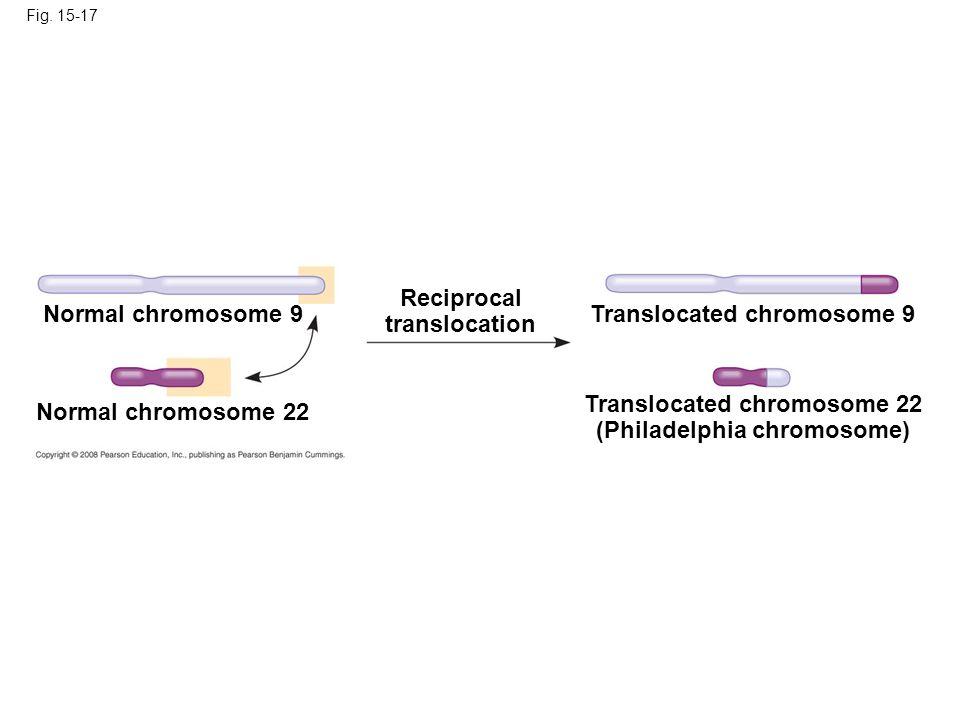 Fig. 15-17 Normal chromosome 9 Normal chromosome 22 Reciprocal translocation Translocated chromosome 9 Translocated chromosome 22 (Philadelphia chromo