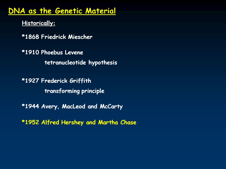 DNA as the Genetic Material Historically: *1868 Friedrick Miescher *1910 Phoebus Levene tetranucleotide hypothesis *1927 Frederick Griffith transforming principle *1944 Avery, MacLeod and McCarty *1952 Alfred Hershey and Martha Chase