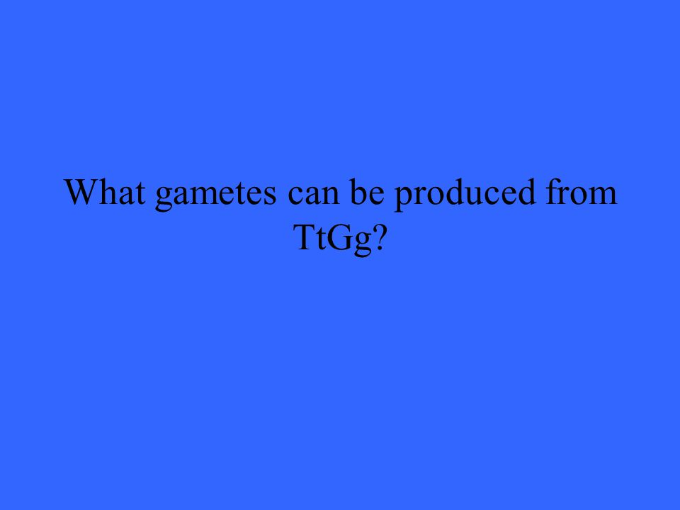 What gametes can be produced from TtGg?