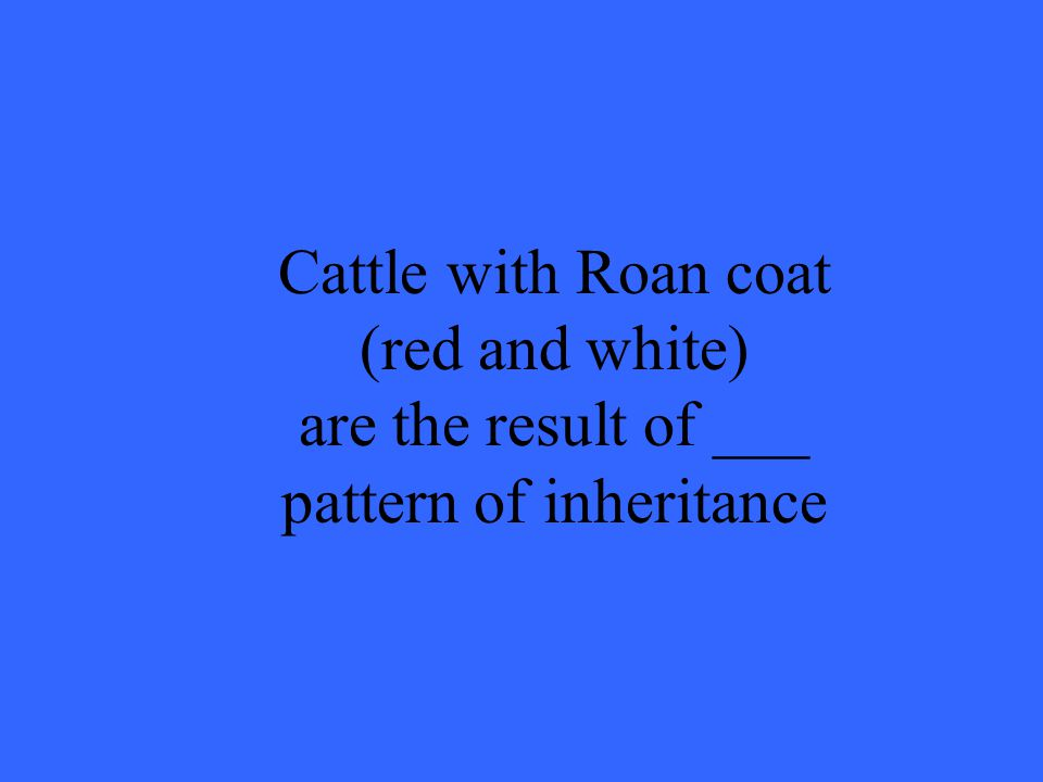 Cattle with Roan coat (red and white) are the result of ___ pattern of inheritance