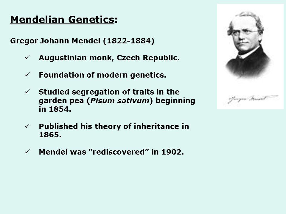 Mendelian Genetics: Gregor Johann Mendel (1822-1884) Augustinian monk, Czech Republic. Foundation of modern genetics. Studied segregation of traits in