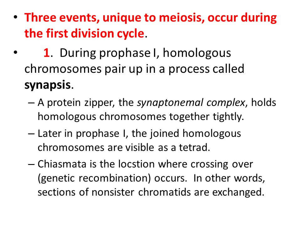 Three events, unique to meiosis, occur during the first division cycle. 1. During prophase I, homologous chromosomes pair up in a process called synap