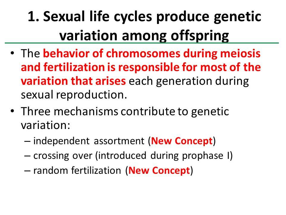 The behavior of chromosomes during meiosis and fertilization is responsible for most of the variation that arises each generation during sexual reproduction.