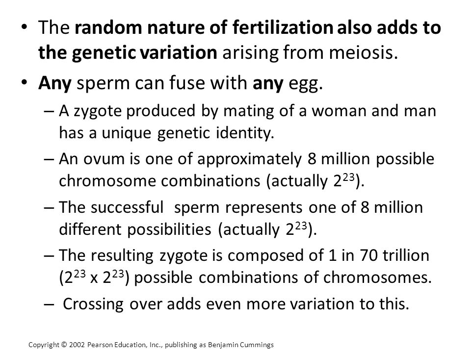 The random nature of fertilization also adds to the genetic variation arising from meiosis. Any sperm can fuse with any egg. – A zygote produced by ma