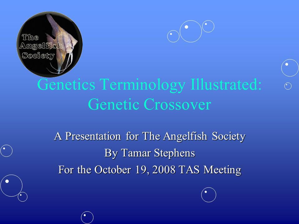 Genetics Terminology Illustrated: Genetic Crossover A Presentation for The Angelfish Society By Tamar Stephens For the October 19, 2008 TAS Meeting
