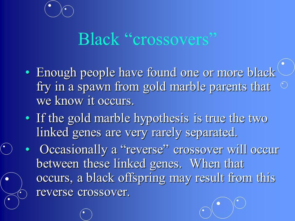 Black crossovers Enough people have found one or more black fry in a spawn from gold marble parents that we know it occurs.Enough people have found one or more black fry in a spawn from gold marble parents that we know it occurs.