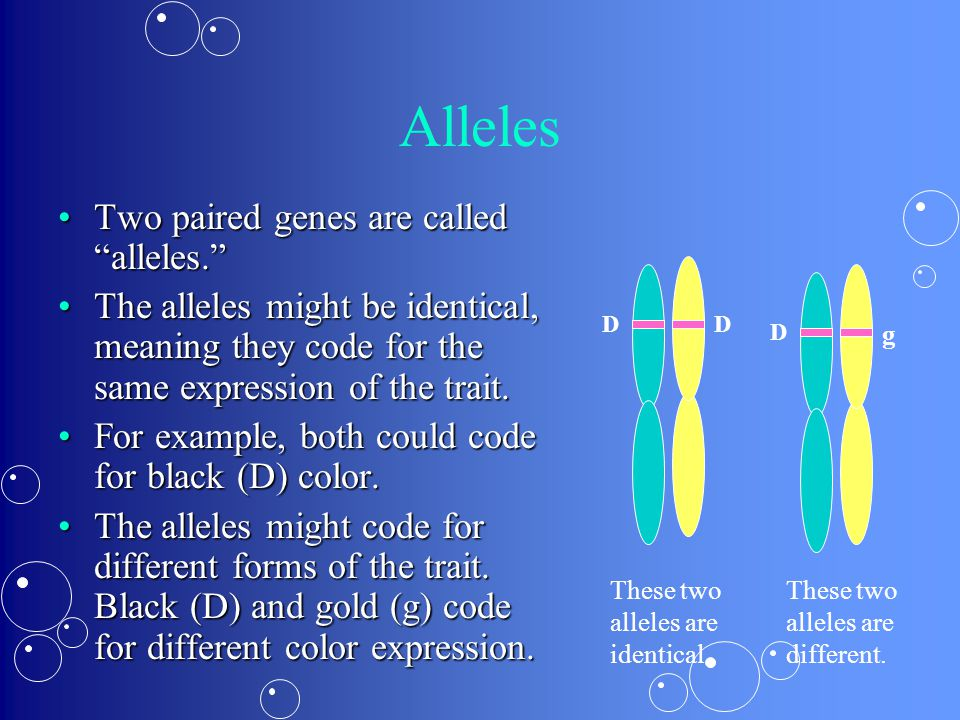 Alleles Two paired genes are called alleles. Two paired genes are called alleles. The alleles might be identical, meaning they code for the same expression of the trait.The alleles might be identical, meaning they code for the same expression of the trait.