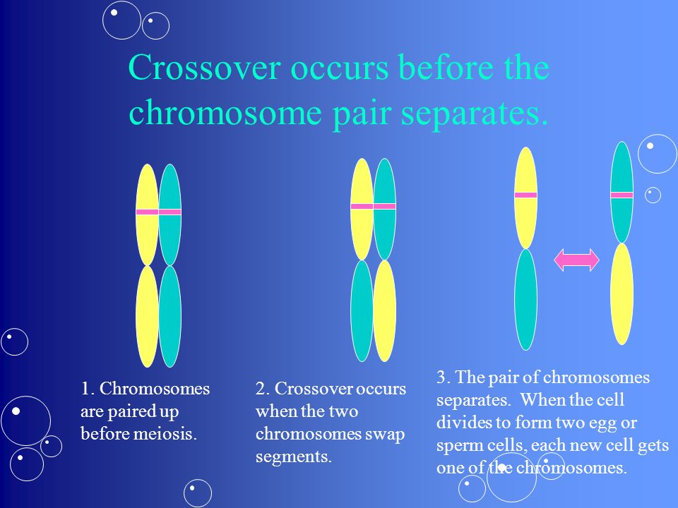Crossover occurs before the chromosome pair separates.