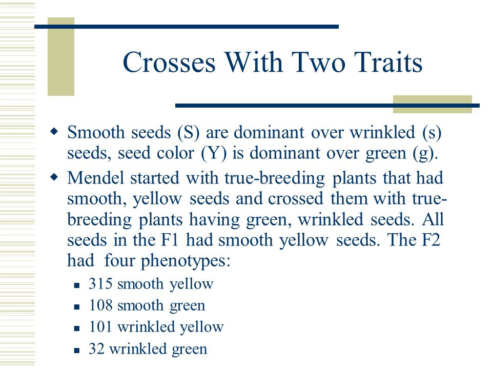 Crosses With Two Traits  Smooth seeds (S) are dominant over wrinkled (s) seeds, seed color (Y) is dominant over green (g).  Mendel started with true