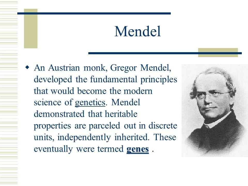 Mendel genes genes  An Austrian monk, Gregor Mendel, developed the fundamental principles that would become the modern science of genetics.