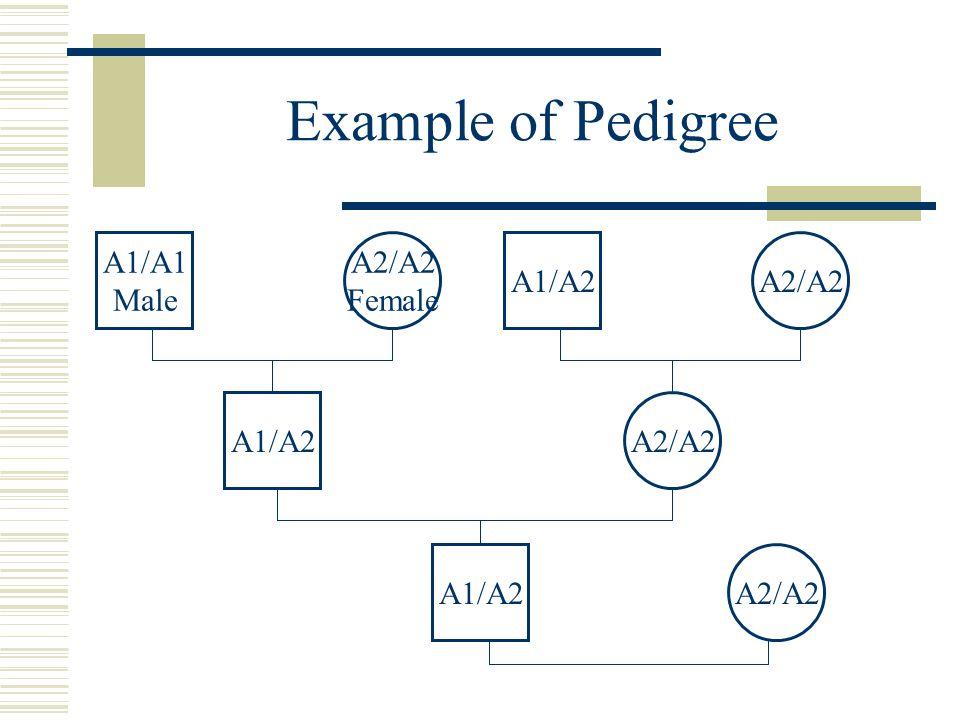 Example of Pedigree A2/A2 A1/A2 A2/A2 Female A1/A1 Male A2/A2A1/A2 A2/A2