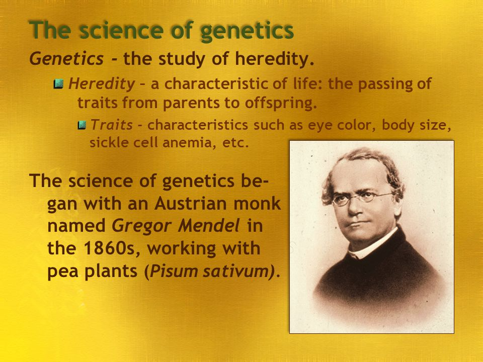 The science of genetics Genetics - the study of heredity. Heredity – a characteristic of life: the passing of traits from parents to offspring. Traits