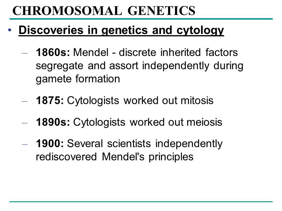 CHROMOSOMAL GENETICS Discoveries in genetics and cytology – 1860s: Mendel - discrete inherited factors segregate and assort independently during gamete formation – 1875: Cytologists worked out mitosis – 1890s: Cytologists worked out meiosis – 1900: Several scientists independently rediscovered Mendel s principles